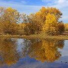 Fall Mirror by JBoyer