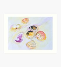 Shells - Jimmys Beach Australia Art Print