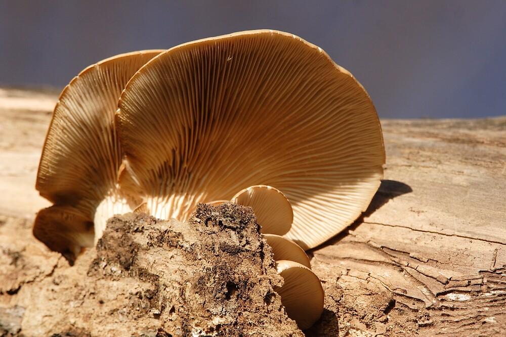 A Mushroom Canapé by DigitallyStill