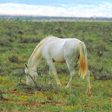 Wild Horse by Speckle