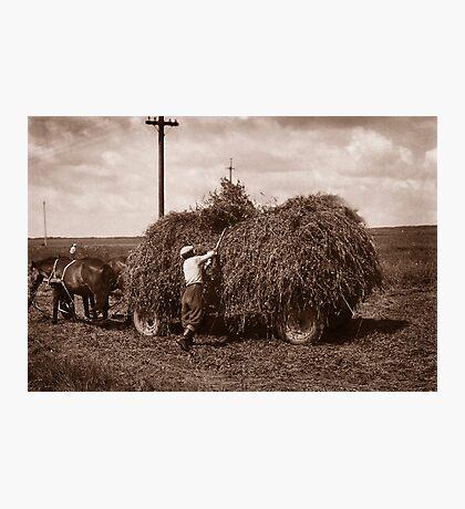 Hay Wagon, Carpathian Foothills, Ukraine Photographic Print