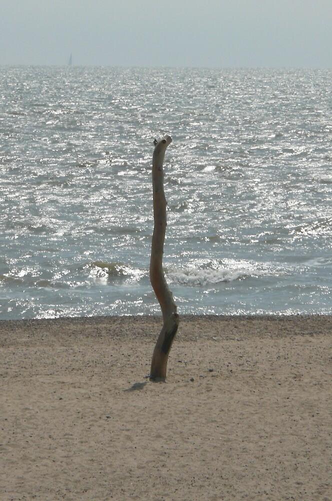 Beach, Serpent by Angela Wiley
