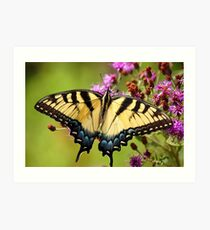 Tiger Swallowtail Art Print