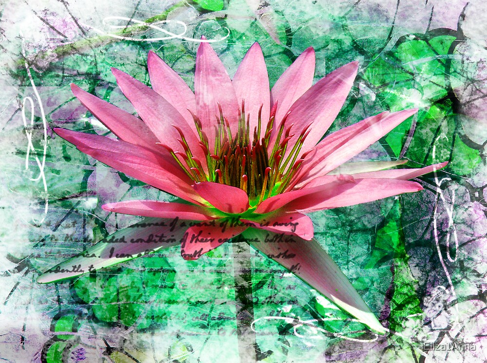 Pink waterlily by Eliza1Anna