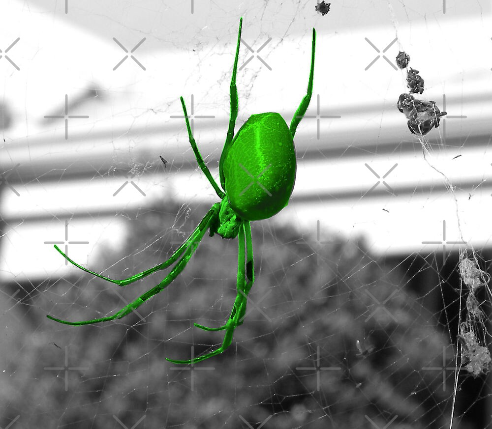 Orb Spider by TeAnne