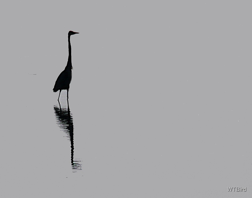 Heron at Low Tide by WTBird