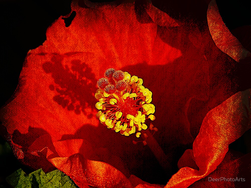 Inside the World of A Hibiscus by DeerPhotoArts