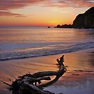 Driftwood by Paul Moore