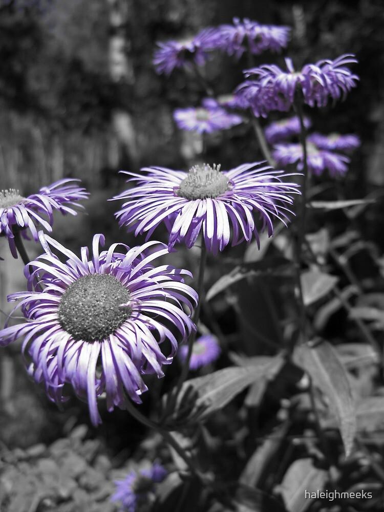Purple Flowers - Telluride Colorado by haleighmeeks