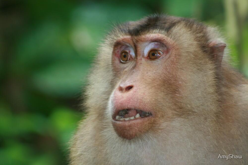 Macaque's gaze by AmyShaw