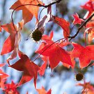 Autumn leaves by LifeImages
