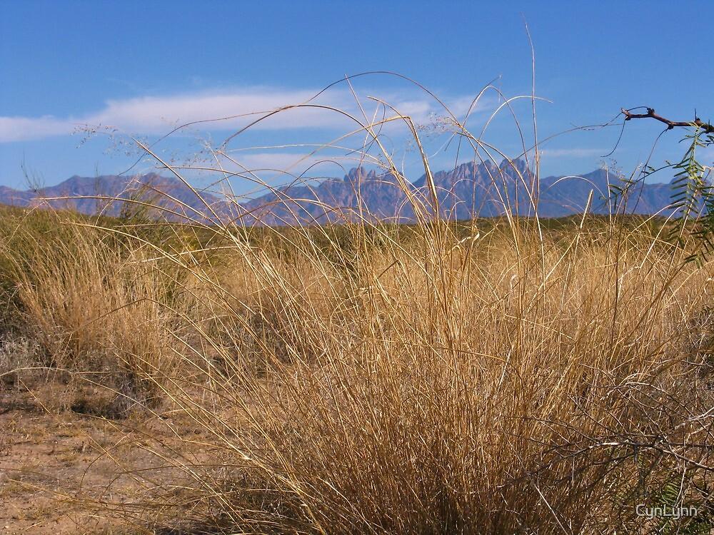 Desert View, Organ Mountians by CynLynn