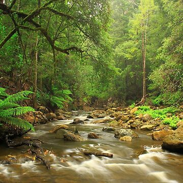 Flowerdale River , Preolenna by phillip24