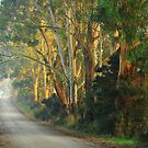 Lades Road Gums by phillip wise