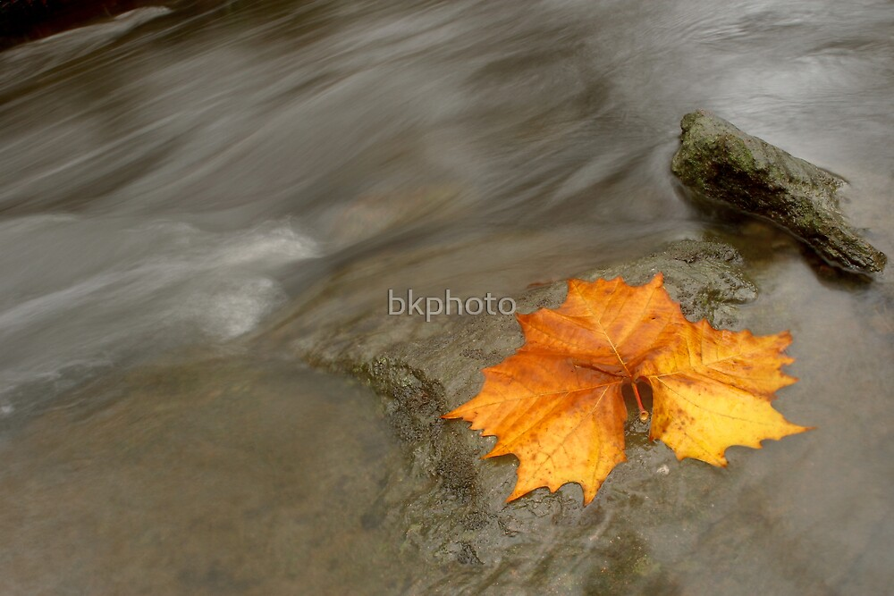 Autumn I by bkphoto