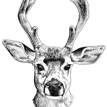 A Cute Deer Face by srw110