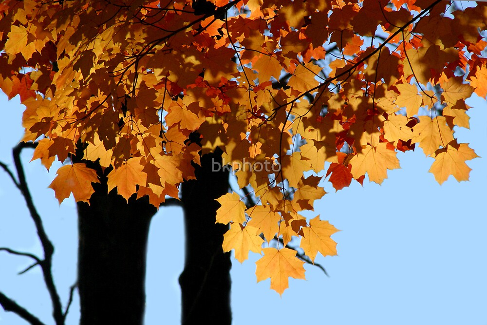 Autumn V by bkphoto