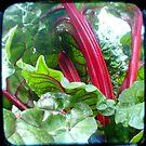 Ruby by Northcote Community  Gardens
