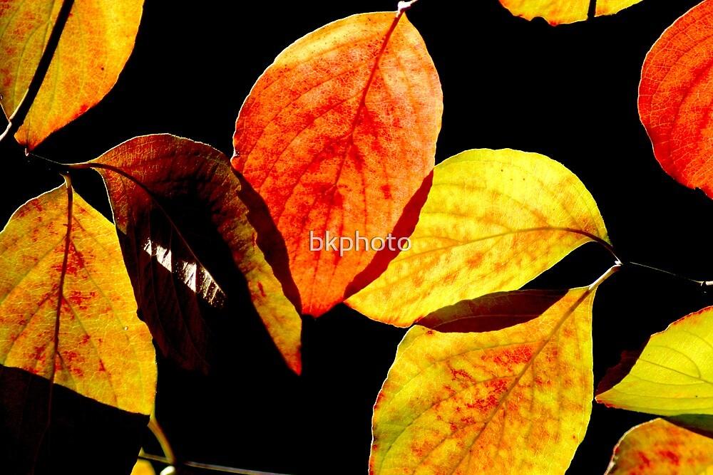 Autumn VI by bkphoto