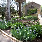 Iris bed with an ancient Stone Building backdrop! Seppeltsfield Winery. by Rita Blom