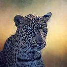 Leopard. by Lyn Darlington