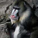mandrill by caradione