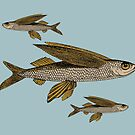 Flying fish - gold on white or blue by hidden-design