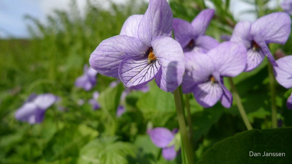 Purple Alaska by Dan Janssen