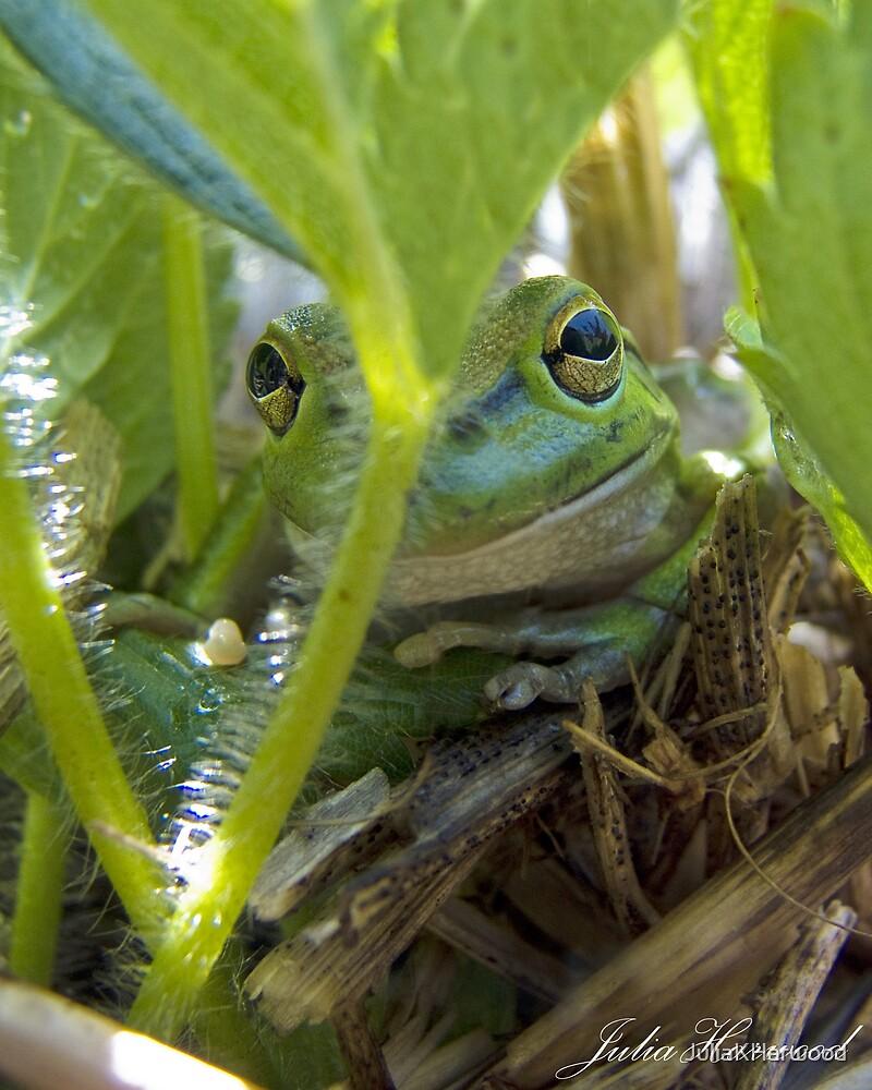 Motorbike Frog by JuliaKHarwood