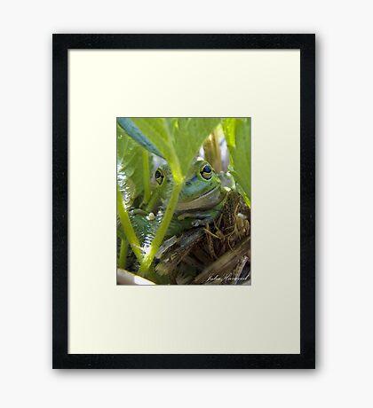 Motorbike Frog Framed Print