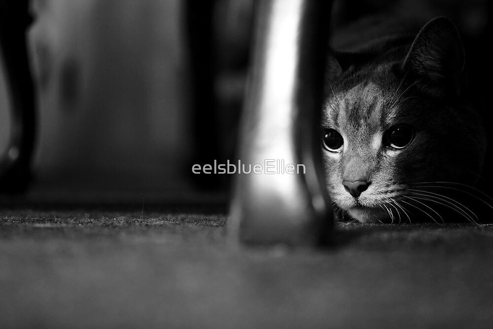 On the Prowl (B&W) by eelsblueEllen