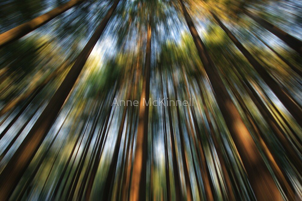 Forest Blur #2 by Anne McKinnell