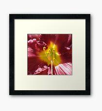 Purple-Red-Hippeastrum-(Macro) Framed Print