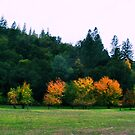Fall In Coloma by NancyC