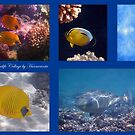 Red Sea Sealife Collage 5 by hurmerinta