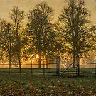 Sunrise by Nature Flicks