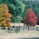 Country Farm by NancyC