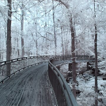Millsap Canopy Bridge - Infrared by mal-photography
