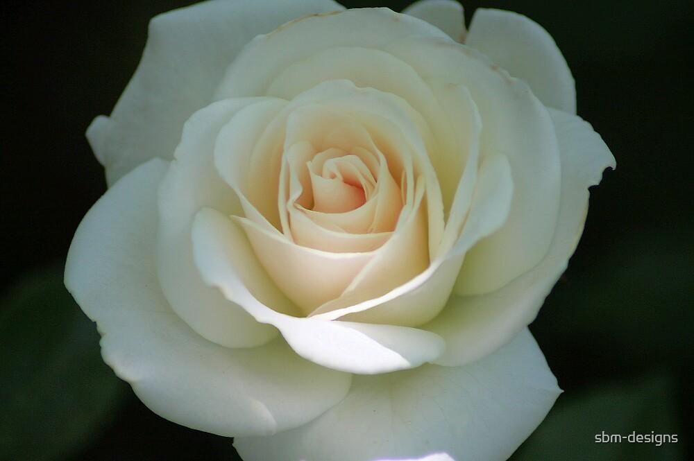 Pale Rose by sbm-designs