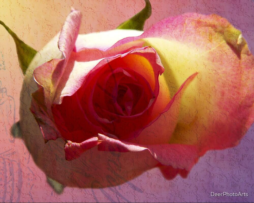 Rose Beauty by DeerPhotoArts