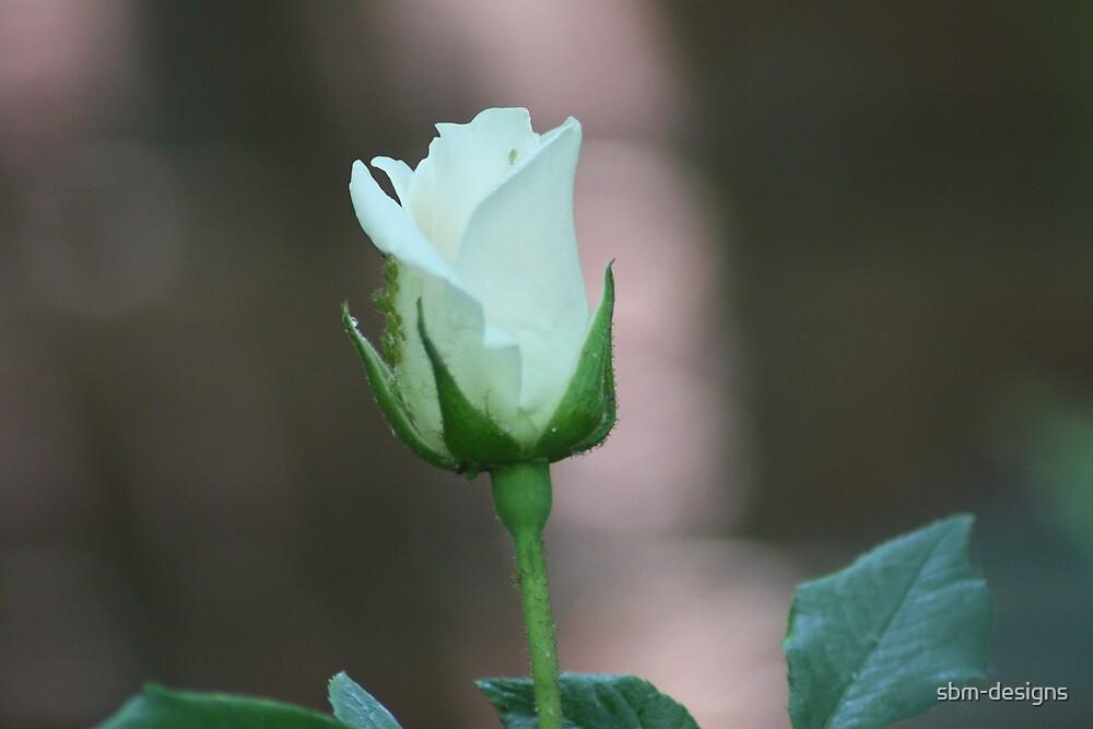 Budding Pale Rose by sbm-designs