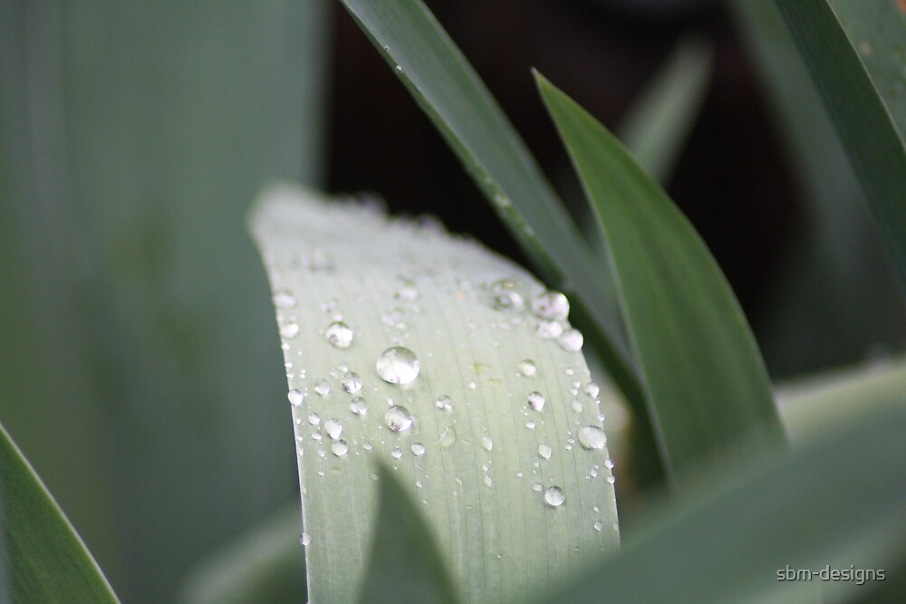 Water drops on grass by sbm-designs