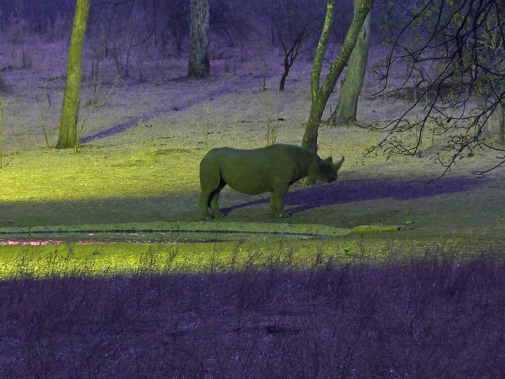 Majete Rhino at dusk by simoncewing