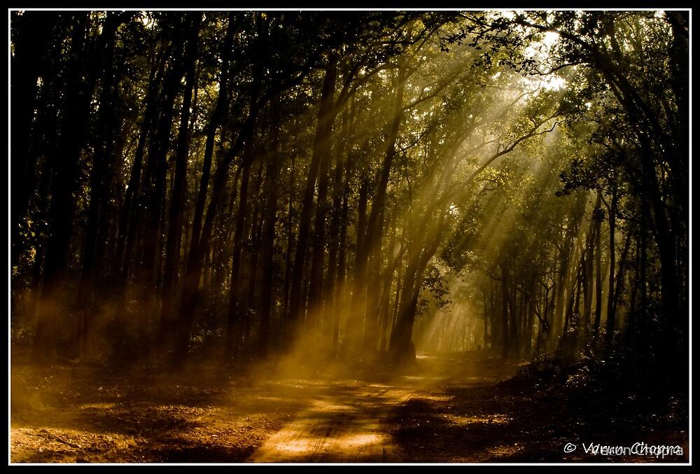 Morning Rays! by Varun Chopra
