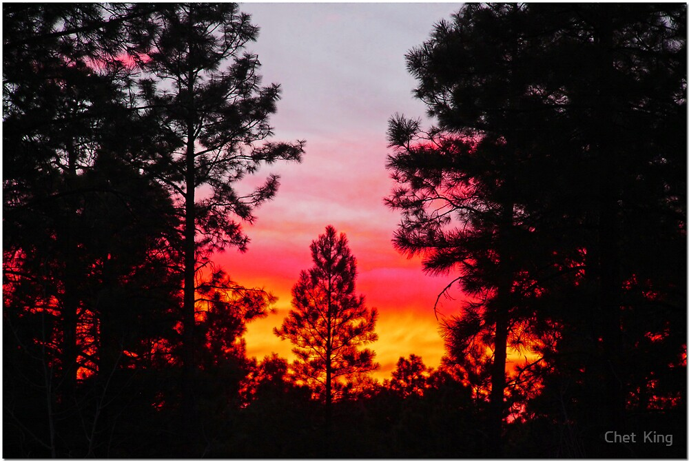 Sunset Through The Pines by Chet  King