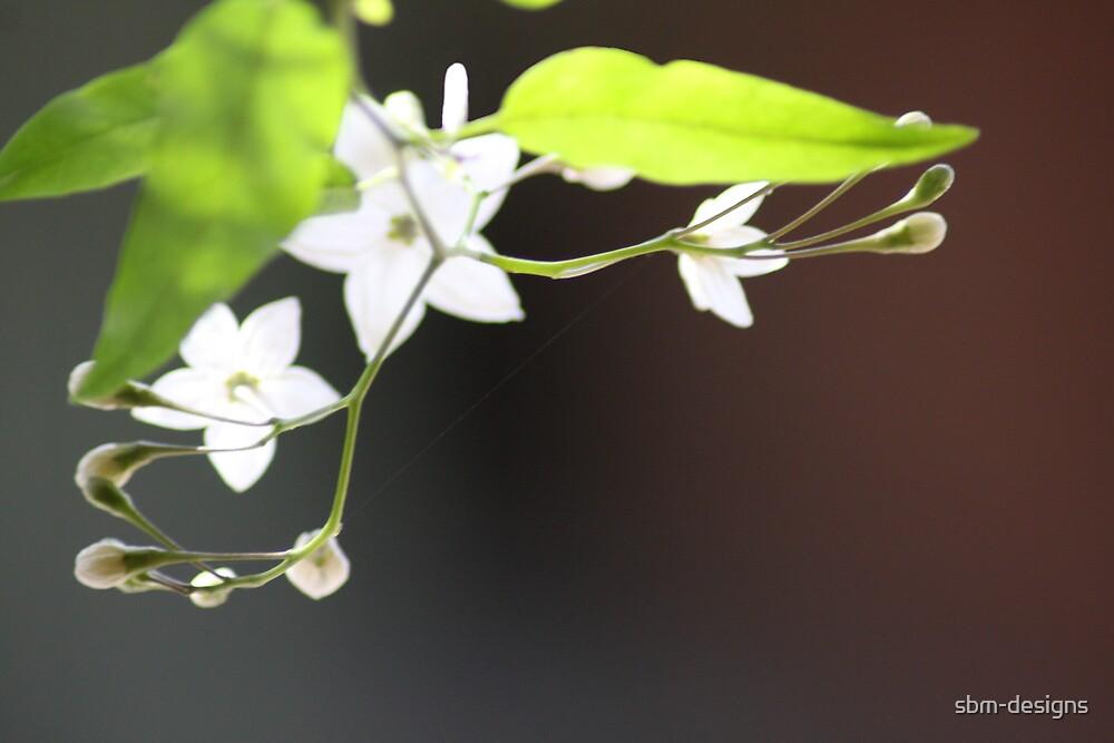White Flower by sbm-designs