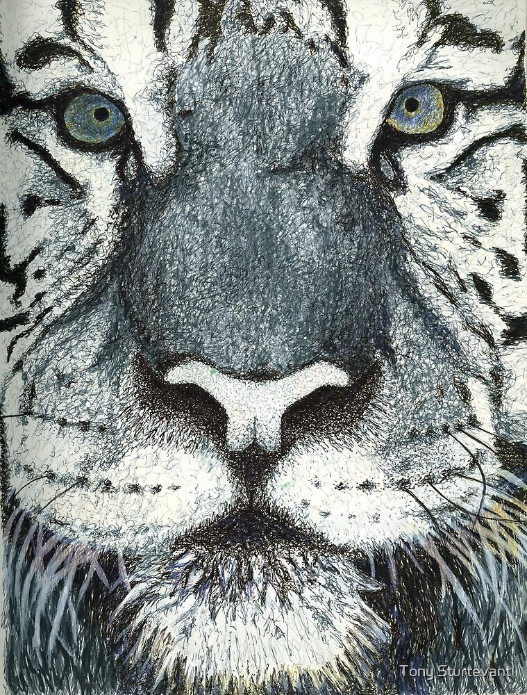 Tony's Tiger by Tony Sturtevant