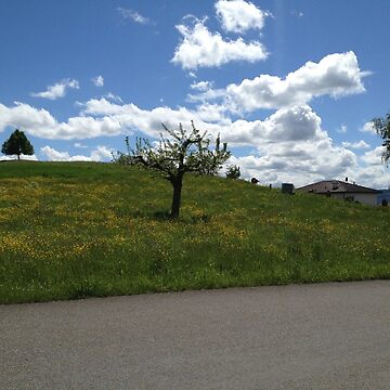 Tree with dandelion meadow and blue cloud sky by Sal71