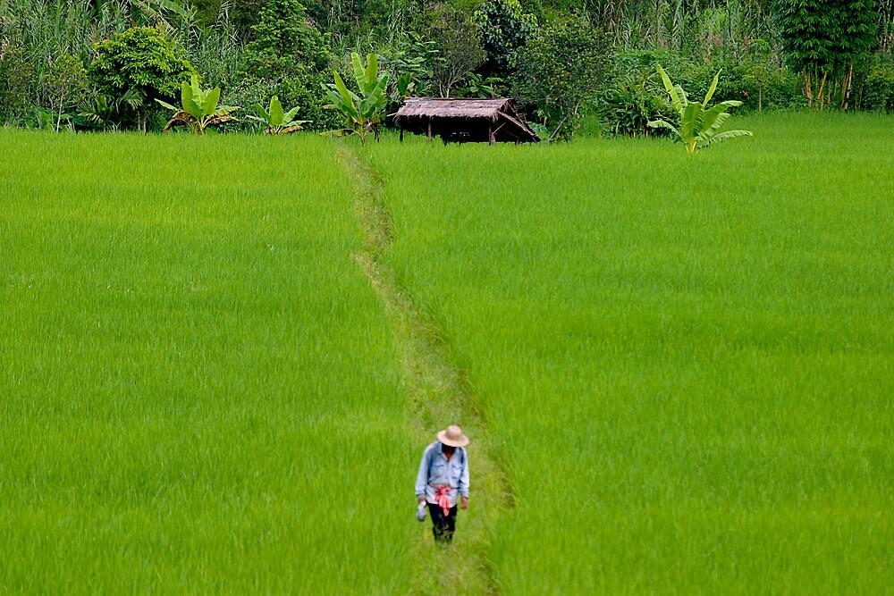 Green Field by markosixty6
