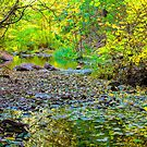 Creekside by BGSPhoto